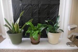 container gardening indoor gardening
