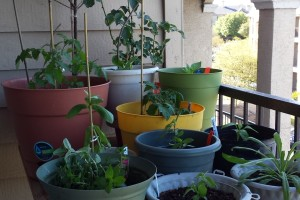 container gardening stake